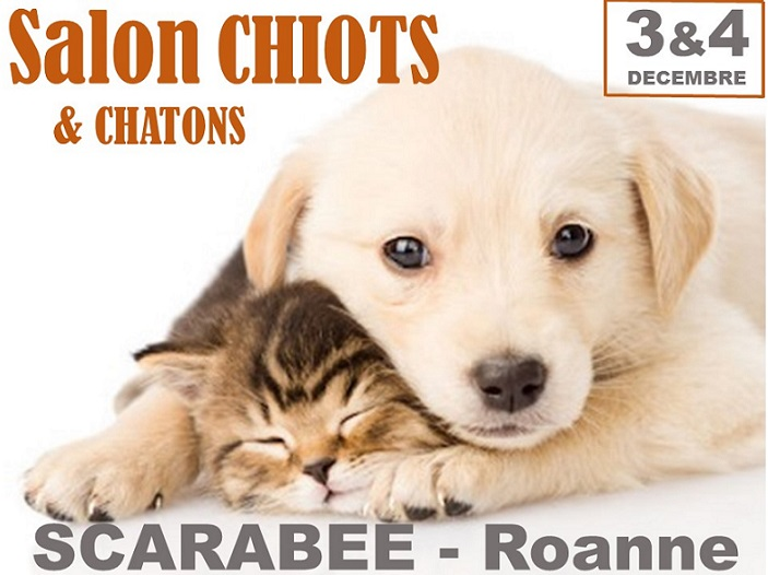 Salon chiots et chatons le scarab e for Salon des chiots